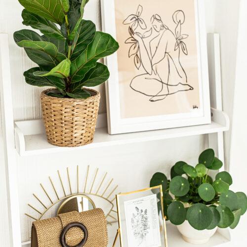 1-kelseyinlondon-homewithkelsey-plant-guide-best-indoor-plants