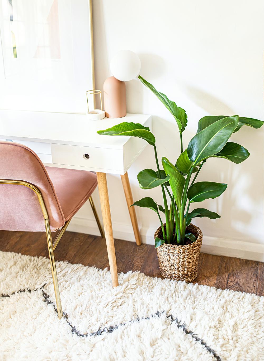 Bird-of-Paradise-Strelitzia-reginae-scandens-kelseyinlondon-homewithkelsey-plant-guide-best-indoor-plants