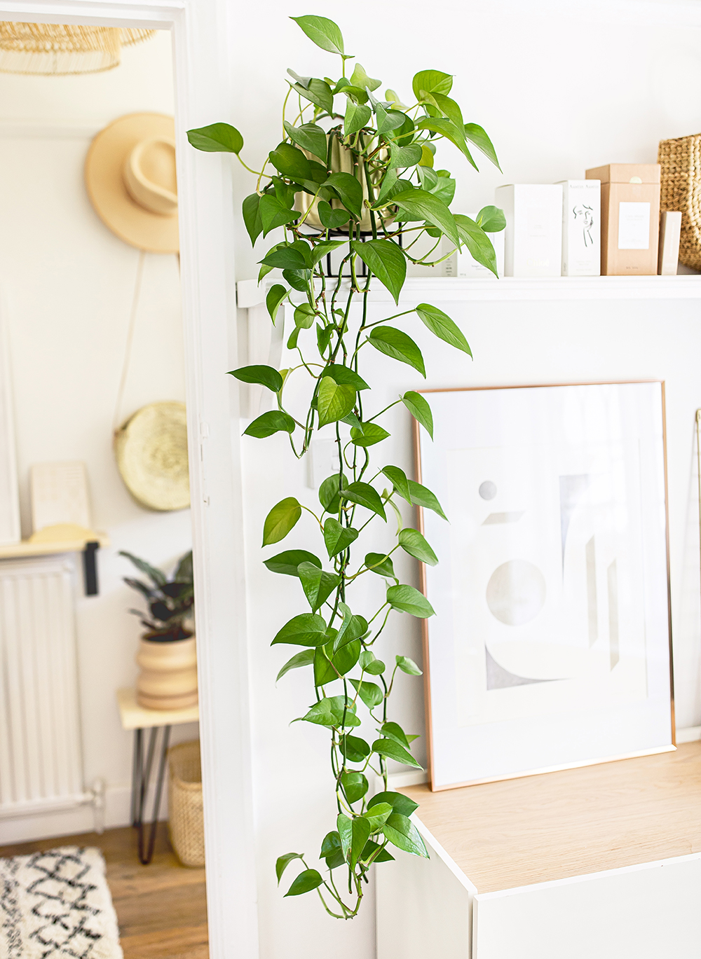 Green-Sweetheart-Plant-Philodendron-scandens-kelseyinlondon-homewithkelsey-plant-guide-best-indoor-plants