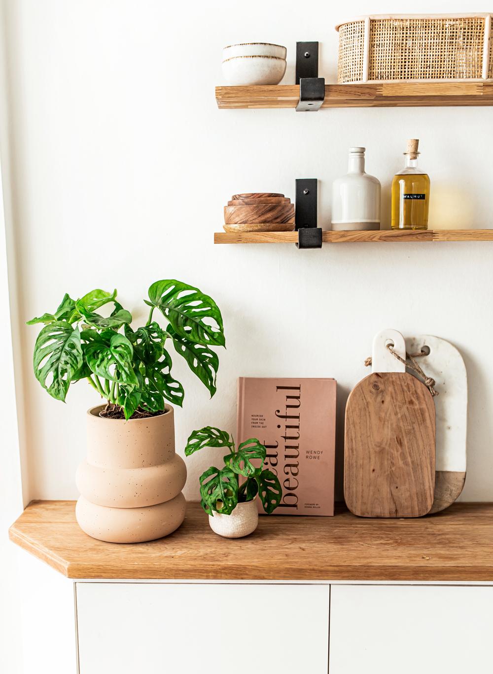 Monkey-Mask-Monstera-kelseyinlondon-homewithkelsey-plant-guide best indoor plants