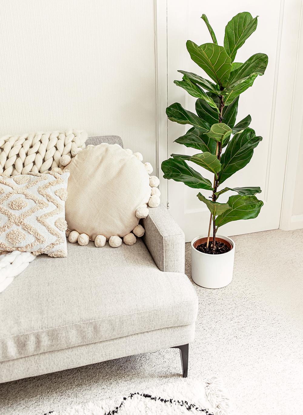 fiddle-leaf-fig-Ficus-lyrata-kelseyinlondon-homewithkelsey-plant-guide-best-indoor-plants